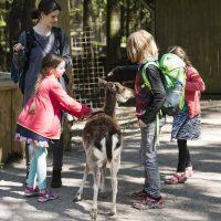 KSG Hannover - WIN-Ausflugstag Wildpark Lüneburger Heide 2018-0