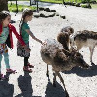 KSG Hannover - WIN-Ausflugstag Wildpark Lüneburger Heide 2018-05-05