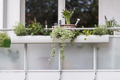 KSG Hannover - Balkon- und Gartenwettbewerb Jury unterwegs 2019-