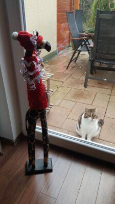 Giraffe mit Katze