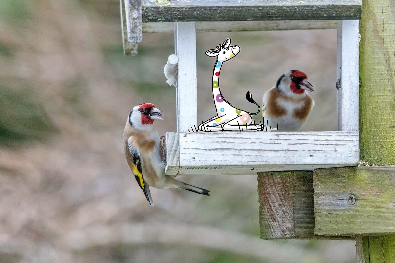 Wann Fliegen Vögel In Den Süden